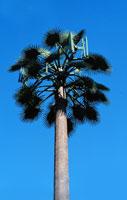 antennae in fan palm